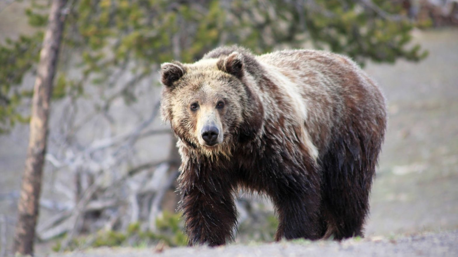 3 Best USA Condition Parks For Viewing Wildlife